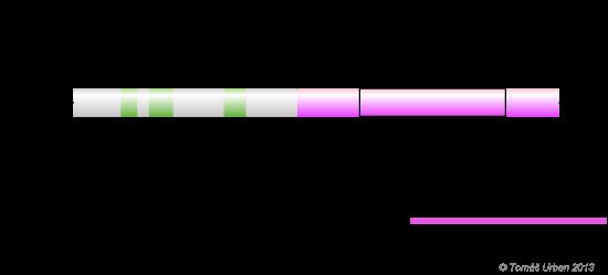Eukaryotic promoter elements